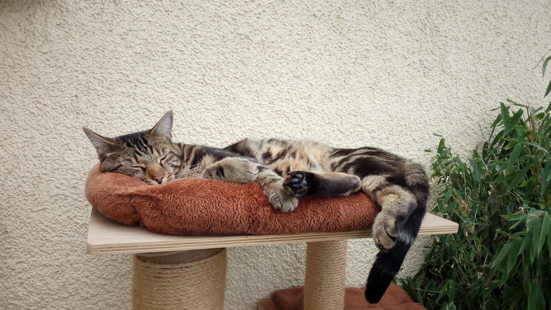 Sabrinas Katzenparadies